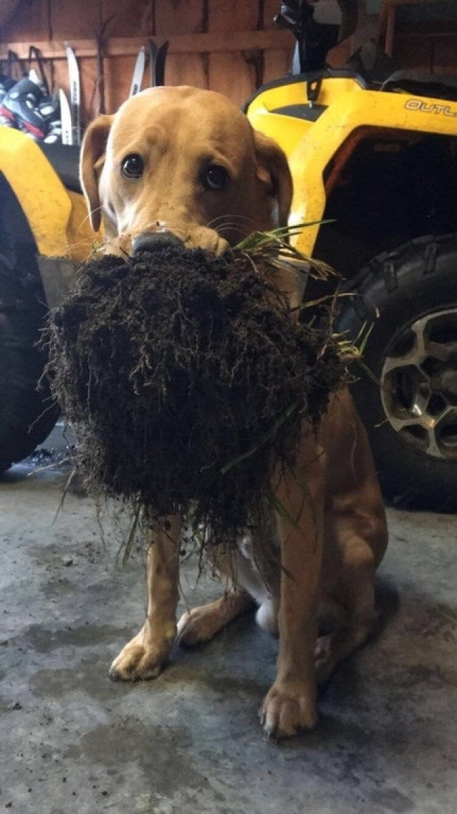 dog who brought back a chunk of soil to his owner
