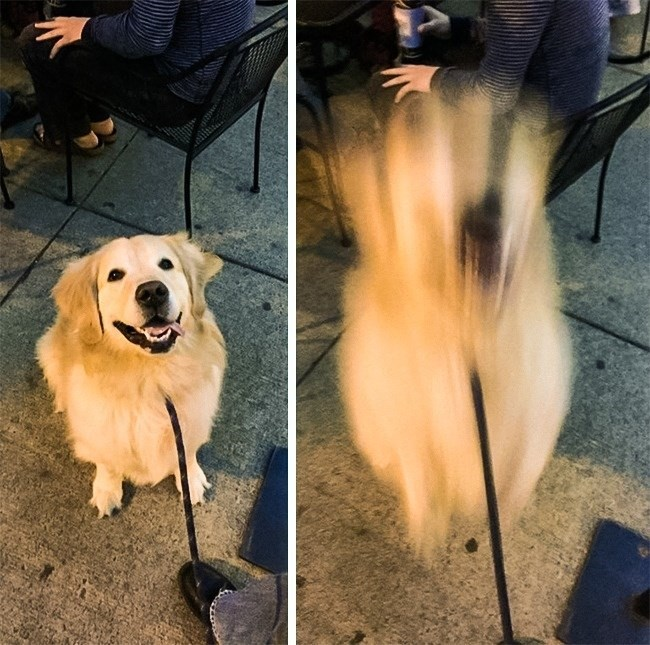 "pic of a dog jumping when he is called a ""good boy"""