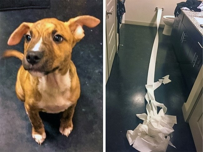 pic of a dog who used toilet paper to clean up its own pee