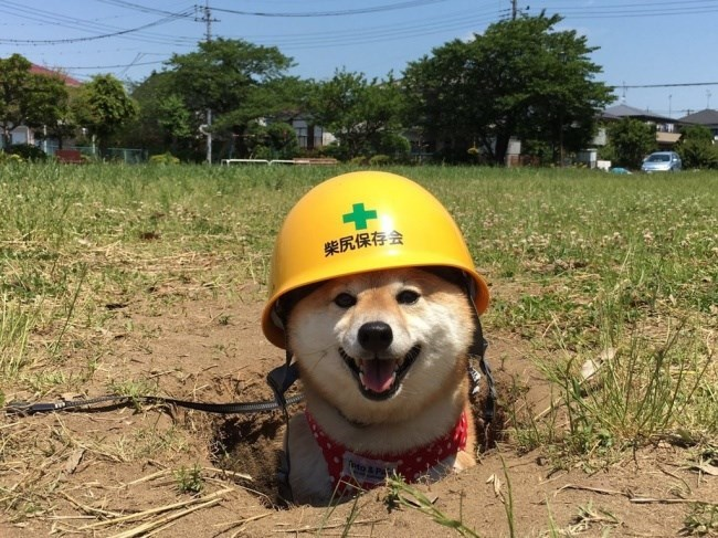 pic of a dog wearing a hard hat in a hole