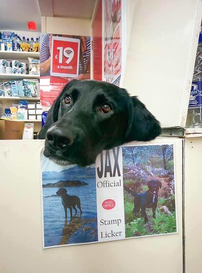 dog who works as a stamp licker at a post office
