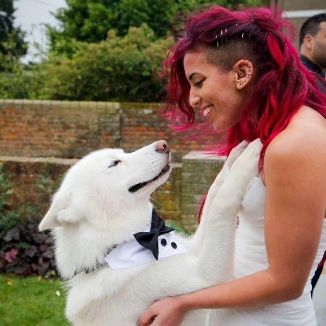 pic of a dog in a bow time smiling at the bride