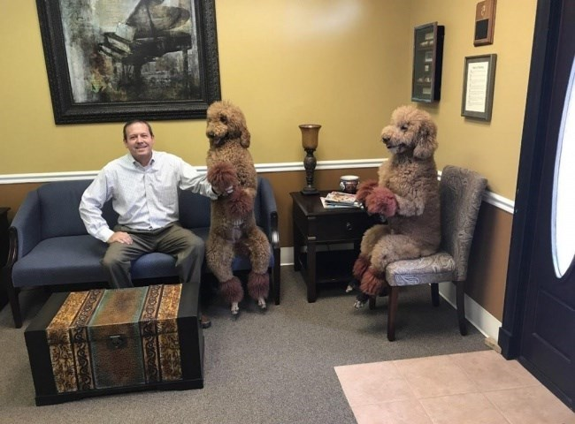pic of two dogs sitting upright in chairs