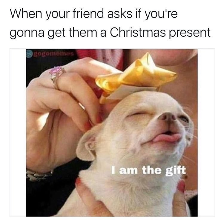 chihuahua dog meme about your friendship being a gift to your friends