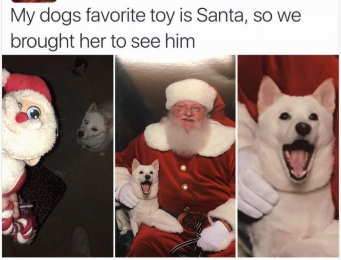 dog meme about dog being brought to meet a mall Santa