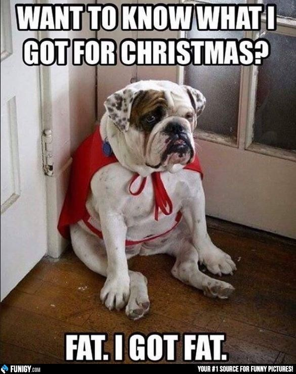 bulldog dog meme about gaining weight during the holidays