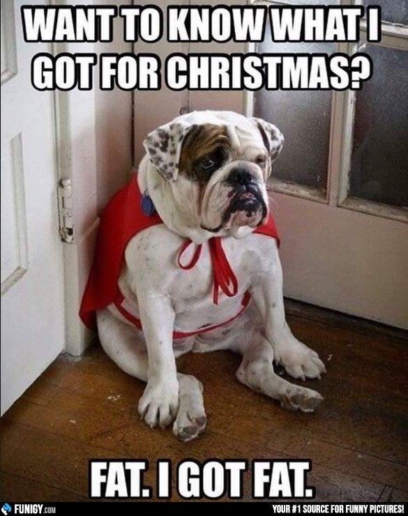 bulldog dog meme about gaining weight during the holidays