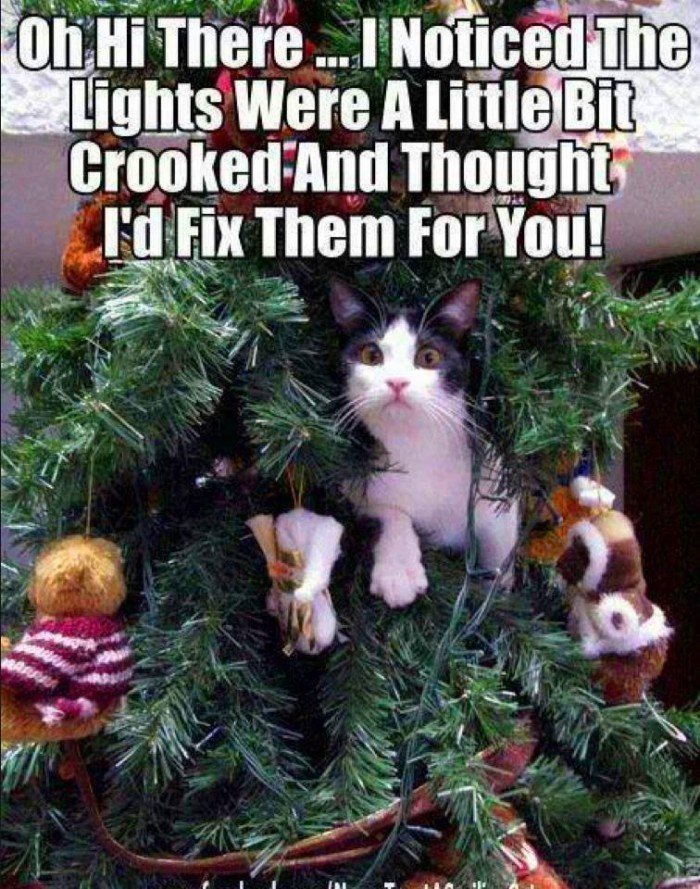 cat meme about playing in the Christmas tree and pretending it was just to fix the lights