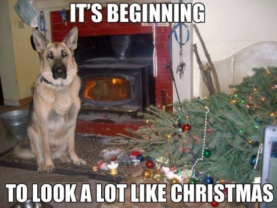 "German Shepherd dog meme about pets destroying the Christmas tree with lyrics from ""it's beginning to look like Christmas"""