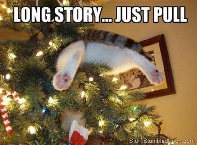 cat meme about pets playing with the Christmas tree and getting stuck