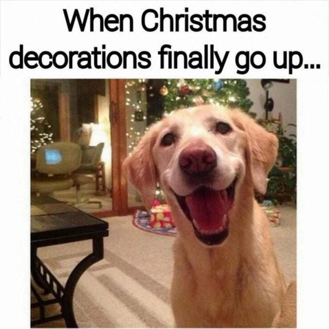 dog meme about being happy after you put on Christmas decorations