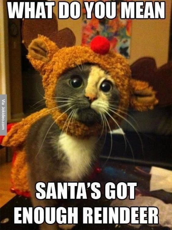 cat meme about cat in reindeer costume applying to work for Santa
