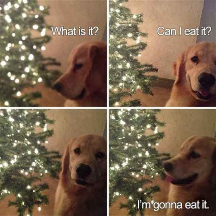 dog meme about dogs wanting to eat everything including Christmas trees