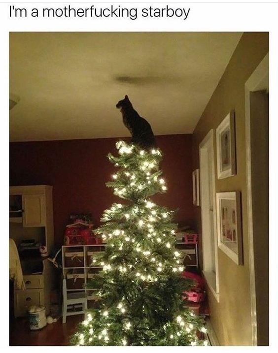 cat meme about being a star with picture of cat sitting on top of Christmas tree