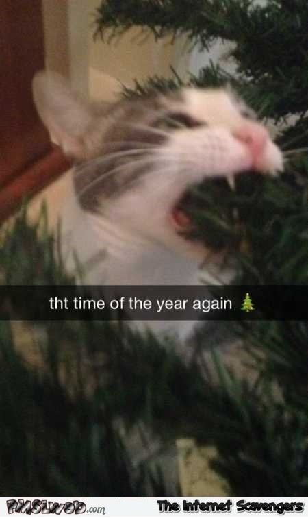 cat meme about pets playing with the holiday decorations with snapchat of cat biting Christmas tree