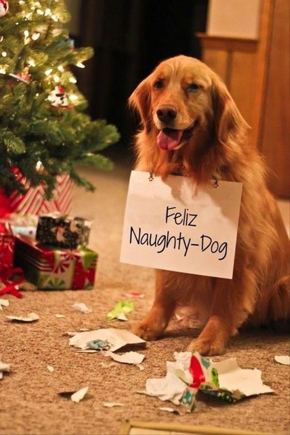"""golden retriever dog meme making pun of """"Feliz Navidad"""" with picture of naughty dog destroying Christmas gifts"""