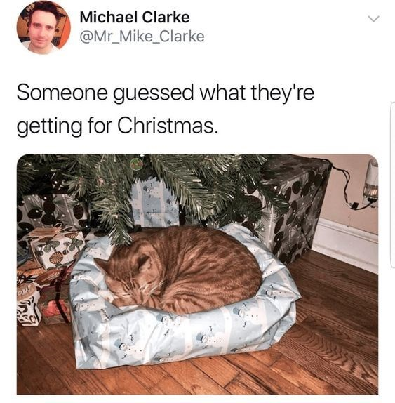 cat meme about cat recognizing wrapped pet bed and sleeping in it before it's even unwrapped