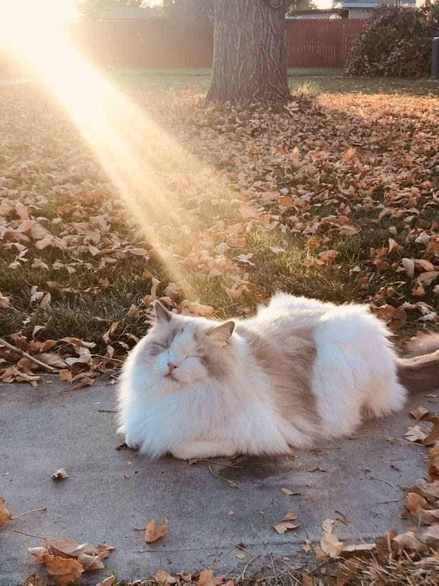 cat sunshine Cats beautiful - 9243760384