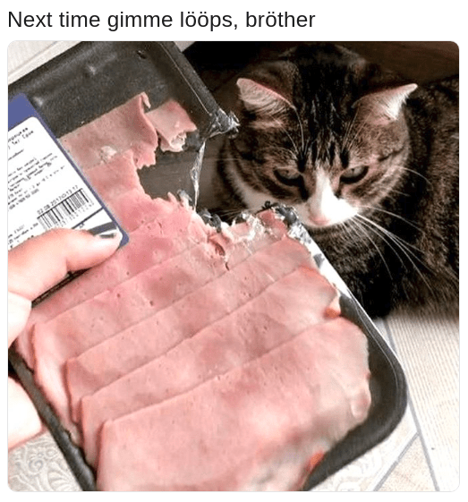 cat that chewed into the meat with caption that this could have been avoided by just giving him some loops
