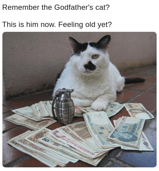 ironic Feeling old yet meme of Godfather's cat