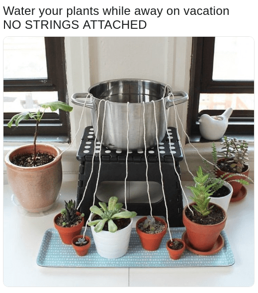 meme about strings attached to plants to water them while you are gone