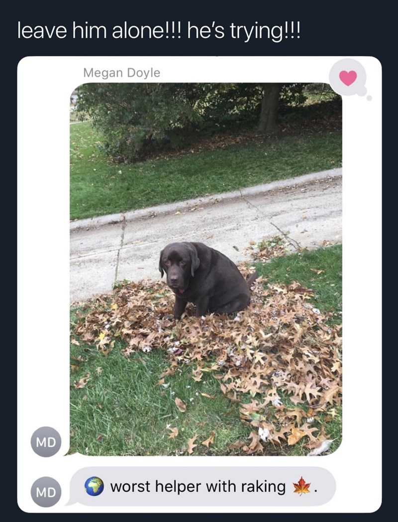 Adaptation - leave him alone!!! he's trying!!! Megan Doyle MD worst helper with raking MD