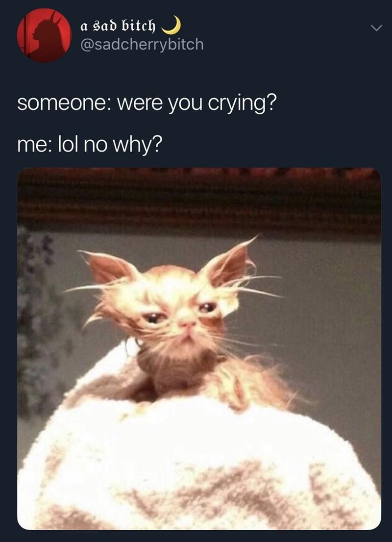 Cat - a sad bitch @sadcherrybitch someone: were you crying? me: lol no why?