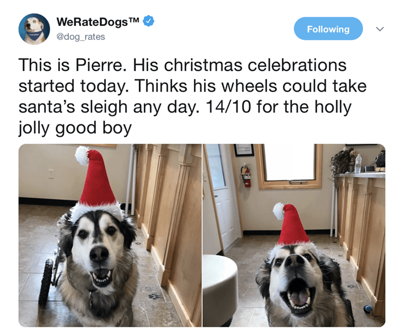 tweet of a dog wearing a Santa hat early