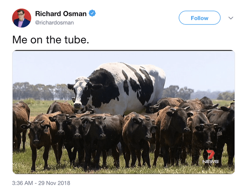 "post about the abnormally large cow an it being on the ""tube''"