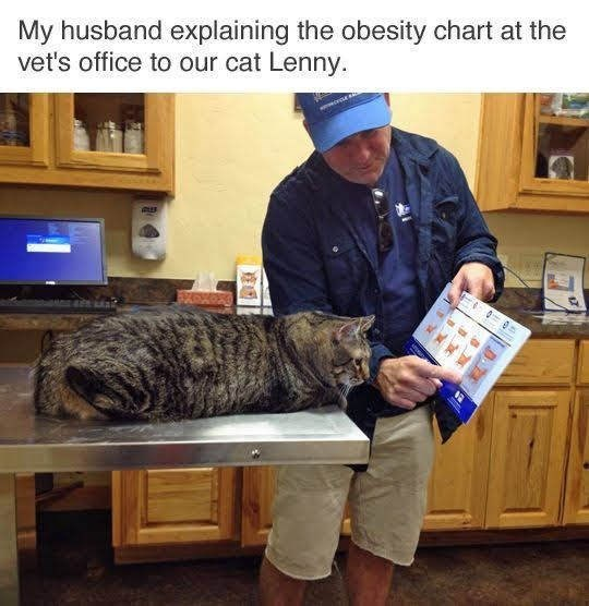 meme of an obese cat looking at an obesity chart by the vet
