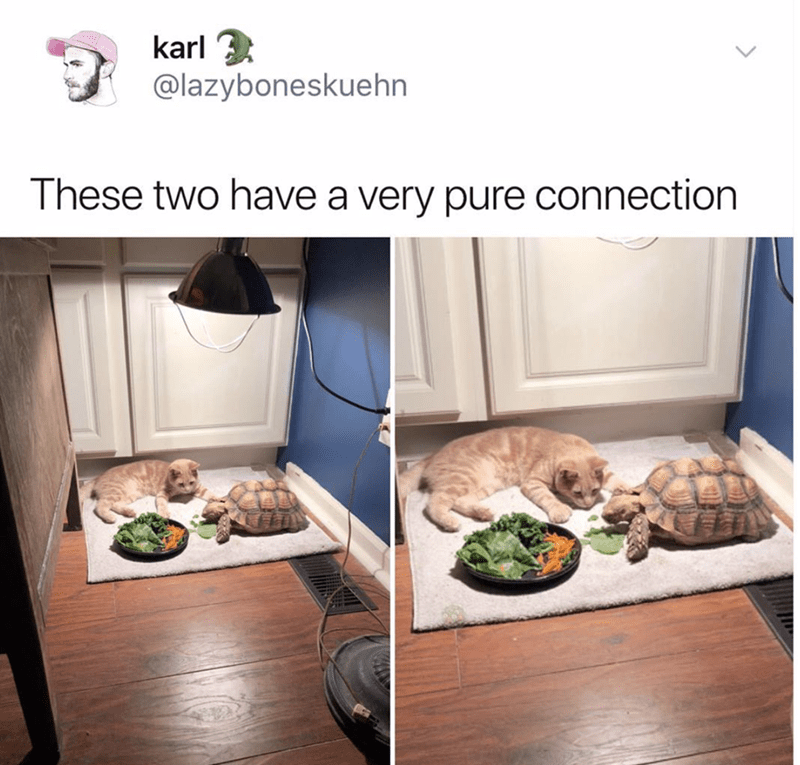 pic of a turtle and a cat laying together on a mat in front of a plate of food