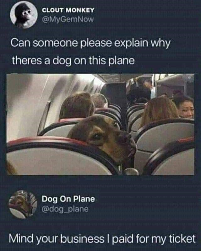 meme about a dog sitting on his own seat on a plane