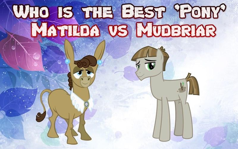 donkey matilda mudbriar best pony - 9244056576