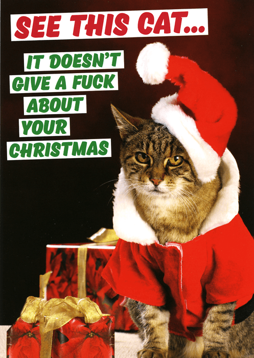 Cat - SEE THIS CAT... IT DOESN'T GIVE A FUCK ABOUT YOUR CHRISTMAS