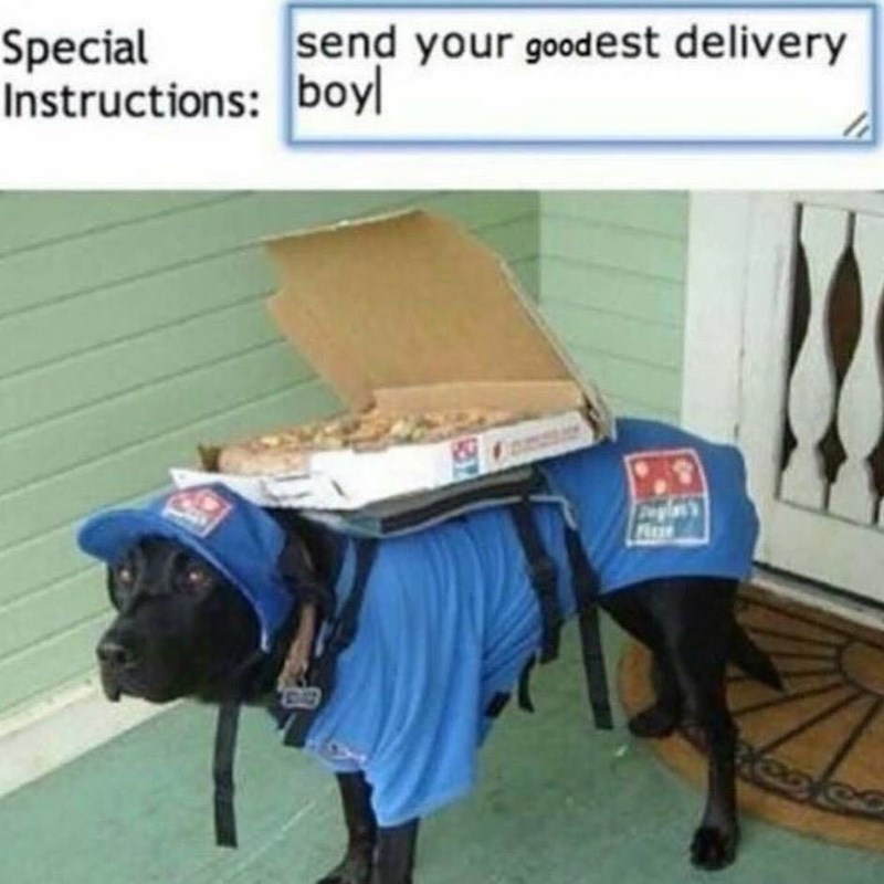 Funny meme about dog delivery person for dominos.