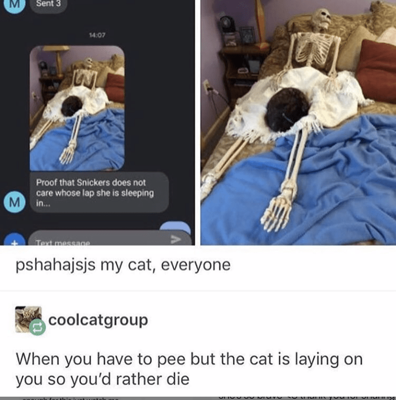 Tumblr thread about dying instead of moving your cat from your lap with photos of cat sleeping on skeleton