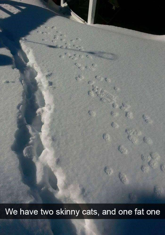 snapchat of 3 sets of paw prints in the snow with one obviously belonging to a fat cat
