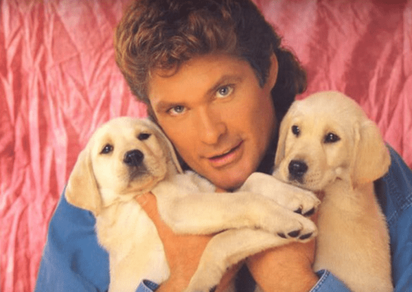 Mullet on young David Hasselhoff as he cuddles two puppies