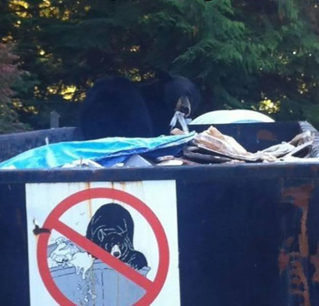 photo of bear inside trash can that has sign prohibiting bears in trash cans