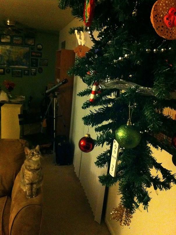 Christmas tree - क