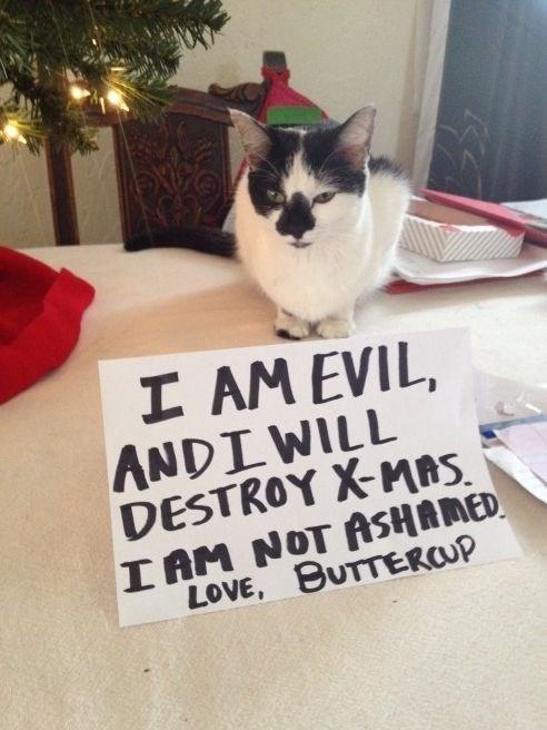 Cat - I AM EVIL, ANDIWILL DESTROY X-MAS I AM NOT ASHAMED LOVE, BUTTERCUP