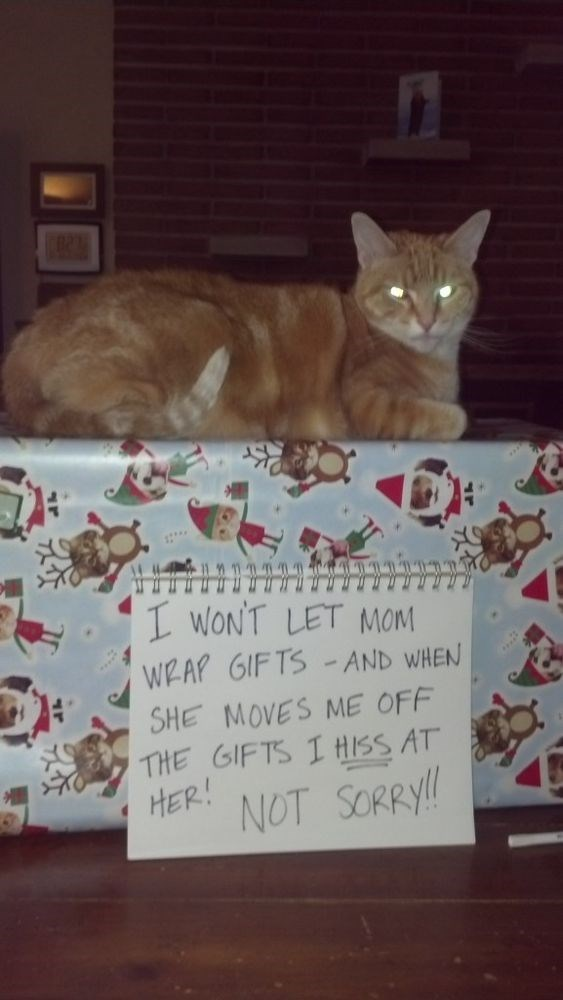 Cat - I wON'T LET MoM WEAP GIFTS AND WHEN SHE MOVES ME OFF THE GIFTS I HISS AT HER! NOT SORRY!