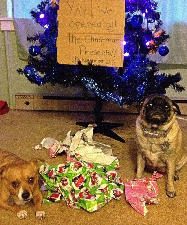 Dog - YAY We Opened all the Ehnstmas Presents!! CHS Navember 24
