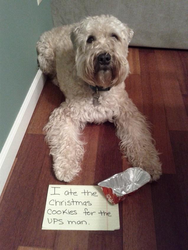 Dog - I ate the Christmas CooKies for the UPS man.