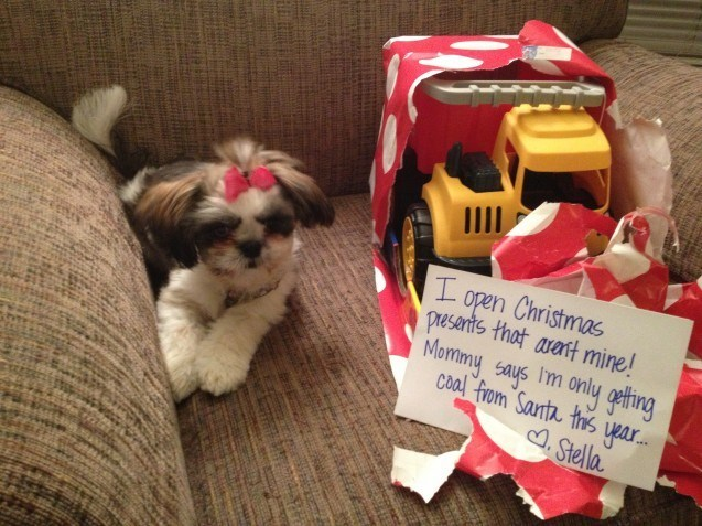 Dog - open Christmas presants that aatt mine! Mortmy says Im only gethng I coa! from Santa ths ear.. .Stella