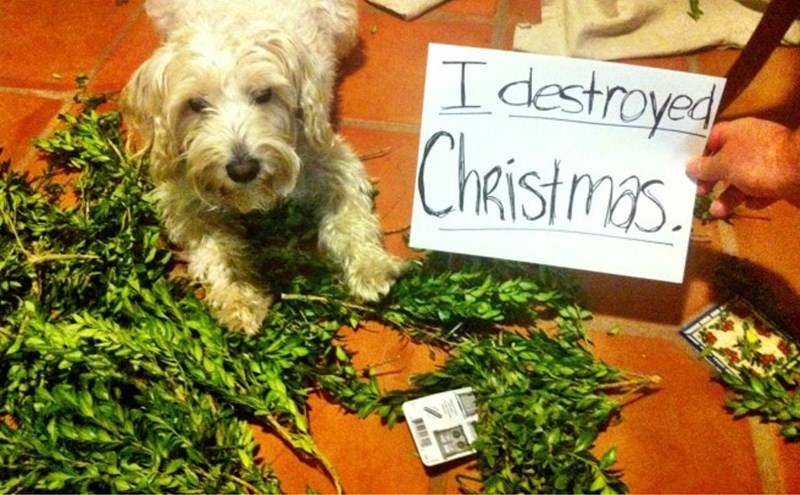 Dog - I destroyed ChAistmas