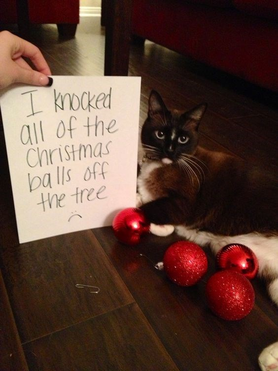 Cat - I knoked all of the Christmas balls off the tree