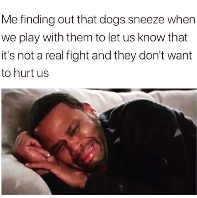 Text - Me finding out that dogs sneeze when we play with them to let us know that it's not a real fight and they don't want to hurt us