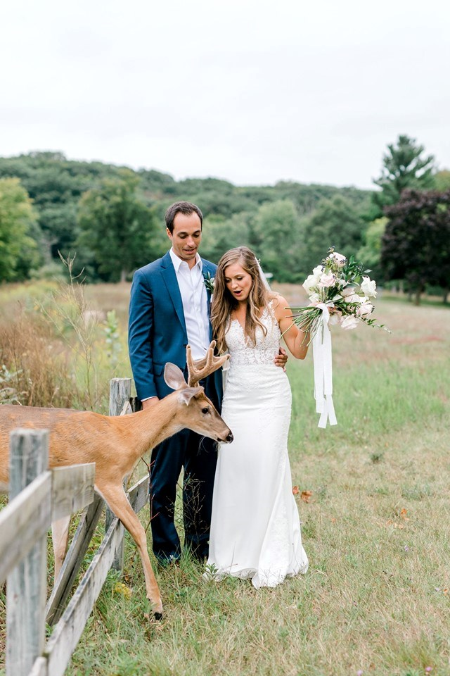deer funny wedding photos