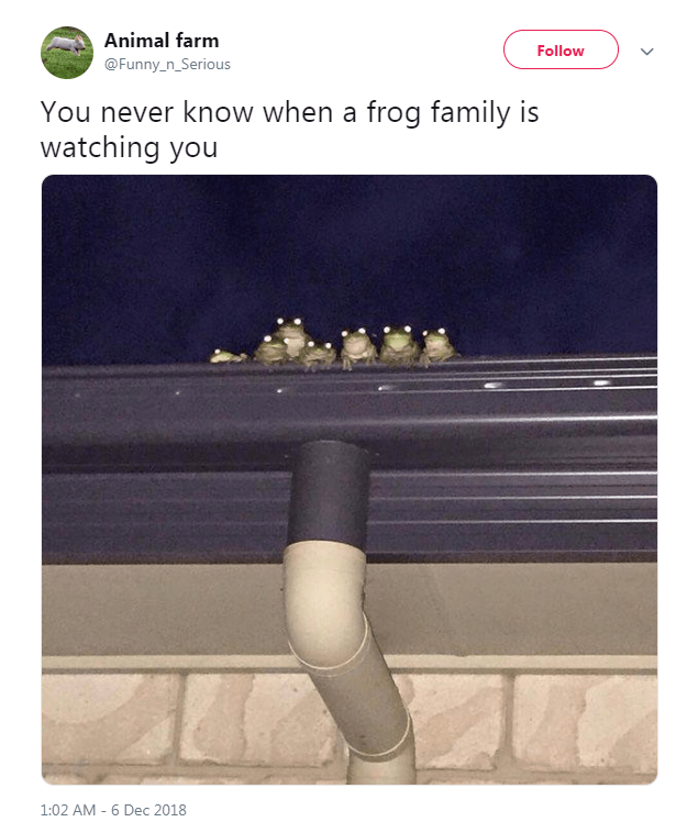 Text - Animal farm Follow @Funny_n_Serious You never know when a frog family is watching you 1:02 AM 6 Dec 2018
